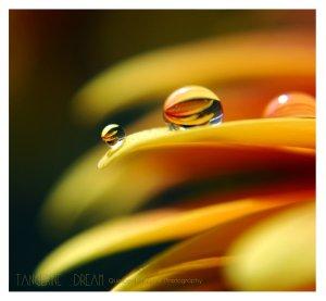 tangerine_dream_by_quiescent_reverie-d3c0lgk