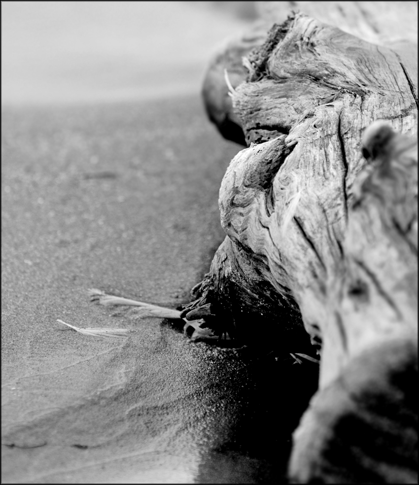 Beached 2